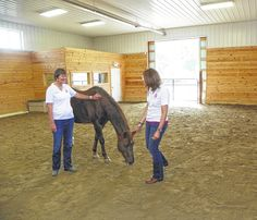 Equines for Freedom aims to heal veterans one horse at a time http://theabingtonjournal.com/news/16328/equines-for-freedom-aims-to-heal-veterans-one-horse-at-a-time?utm_content=buffer58ad6&utm_medium=social&utm_source=pinterest.com&utm_campaign=buffer