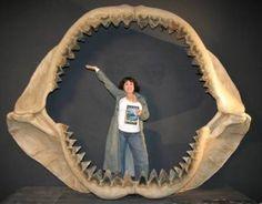 Megalodon Sightings 2009 | ACTRESS LANA WOOD and a 70 FOOT SHARK