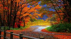 download fall computer high resolution images