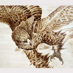 eagle art - Google Search