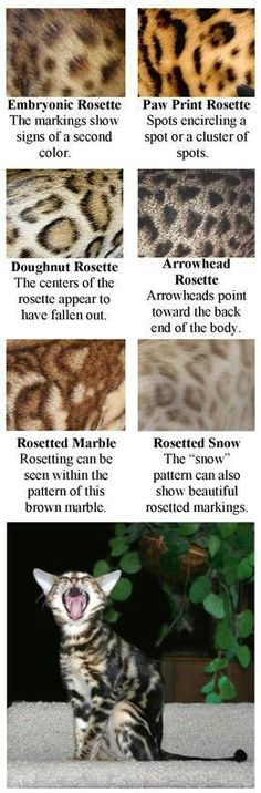 Different patterns of rosettes.