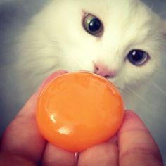 cat & egg