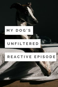 This is how a reactive outburst looks like - and how it makes you feel. Reactive dogs | adopted dogs | scared dogs | fearful dogs | rescue dogs | shelter dogs | outburst | episode | fear | anger | pain | love | unfiltered