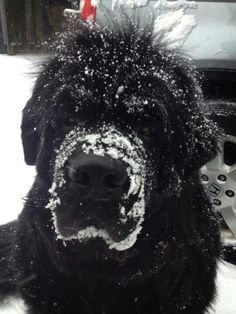 The perfect snow dog