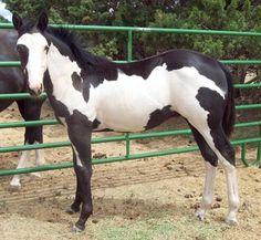 Prairie Wood Ranch Paint Horses