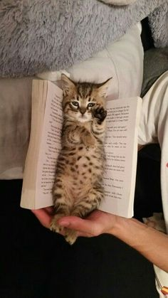Favourite Bookmark – May 2016 – We Love Cats and Kittens Favoris favori – 6 mai 2016 – Nous aimons les chats et chatons Cute Cats And Kittens, I Love Cats, Crazy Cats, Kittens Cutest, Kitty Cats, Cute Kitten Pics, Kittens Meowing, Bengal Kittens, Baby Kitty