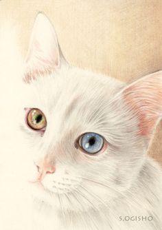 金の目銀の目