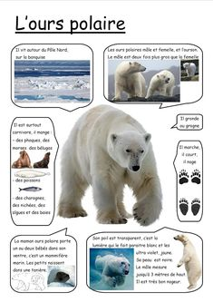Nature Animals - Welcome my homepage Polar Animals, Nature Animals, Polar Bear, Le Morse, Carnival Of The Animals, French Language Lessons, French Education, Bear Theme, French Classroom