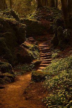 Caminho na floresta …