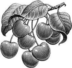Plants by Michael Halbert, via Behance