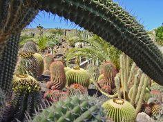 Cactus y Animal Park    Alberga una gran colección de plantas y aves exóticas. El parque se divide en 4 zonas: Cactus & Animal Park, Amazonia, Jurassic Land y Butterfly Garden. Ocupa una extensión de 100.000 metros cuadrados aproximadamente. El recorrido dura unos 90 minutos.