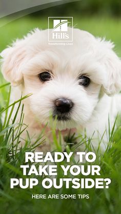 Want to get your puppy out of the house and playing, but aren't sure what you can do? These tips for playing with puppies will help new pet parents safely get their puppies out and about for fun and socialization. Outdoor Games, Outdoor Play, Outdoor Activities, Fun Activities, Loyal Dogs, What You Can Do, New Puppy, Dog Care, Parents