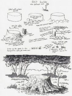 Adron's Art Lesson Plans:MXS  Drawing a Picture of a Tree Stump a Skill Builder For a Young Artist.