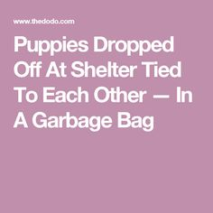 Puppies Dropped Off At Shelter Tied To Each Other — In A Garbage Bag