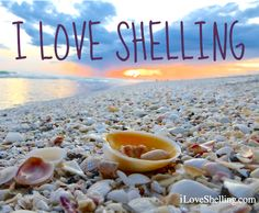 I Love Shelling -Sanibel Island, FL, destination of the World's best shelling beaches. Featured on BBL: http://beachblissliving.com/sanibel-island-worlds-best-shelling-beaches/