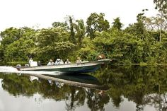 7 amazing Amazon river cruises | Yahoo! Travel International Expeditions' Amazon…
