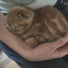 Kittens Cutest, Cats And Kittens, Cute Cats, Funny Cats, Cute Baby Animals, Animals And Pets, Cutest Puppy Ever, Cute Raccoon, Sleepy Cat