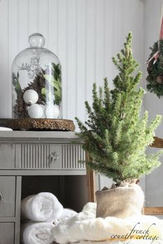 FRENCH COUNTRY COTTAGE: Adding holiday in a hurry - live trees here and there and everywhere.