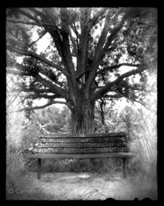My first pinhole photograph I took with a cigar box. Once I developed and scanned this photo I was hooked on pinhole photography. The rest is history!