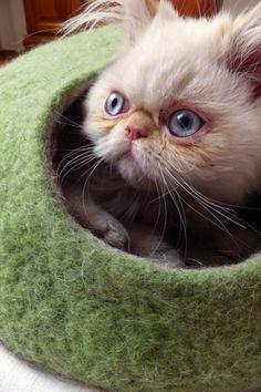 OMG!!! Cuteness...:)  Cat bed created by Grazina Malinauskiene  on Etsy