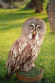 eyes owl búho so cute surprise  Untitled by Anastasia Lyapunova on 500px