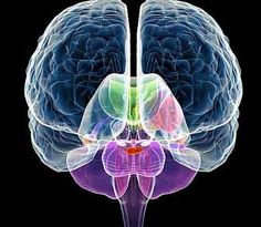 left brain and the right brain waves synchronize