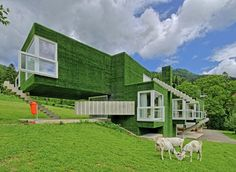 Synthetic Grass-Covered Volumes Adorned With Unusual Details