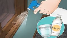 If You Do These 6 Things, You'll Never See another Spider in Your Home Again Home Again, Insect Repellent, Ants, Getting Organized, Keep It Cleaner, Creepy, Improve Yourself, Bedroom, Spiders