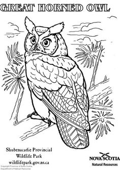 great horned owl coloring pages - photo#20