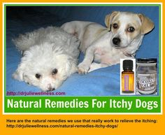 Our doggies, Coconut and Kayla, frequently suffer from dry, itchy skin. They sometimes bite and scratch themselves so much that they get bald spots and Lavender For Dogs, Lavender Oil, Dog Itchy Skin Remedy, Coconut Oil Dogs Skin, Dog Training Near Me, Essential Oils Dogs, Oils For Dogs, Dog Itching, Happy Dogs