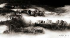 2014-01-19 Bordak atzoko laino sendotik agerien.--- Bordas emergiendo de la persistente niebla de ayer.