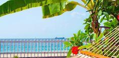 Plante bananeiras em casa e tenha fruta fresca e clima tropical