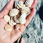 Auch wenn ich mir jedes Jahr vornehme im nächsten Urlaub keine Muscheln mit nach Hause zu nehmen wandern am Ende doch wieder einige der hübschen Strand Souvenirs im Gepäck .... geht euch das auch so? #schwesternallerlei #blogger #muscheln #strand #beach #sea #ocean #seashells #sommer #summer #summertime #instabeach #florida #captiva #sunnyday #instabeach #instasummer #instagood #lifeisgood