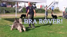 Agility 3 Large Debut & Agility Jumping 3, Rover, Fredrikstad, August 21...