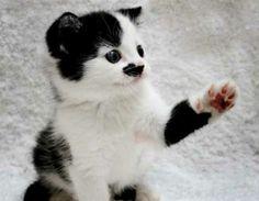 Furry Fuhrers: 8 Animals Who Look Like Hitler