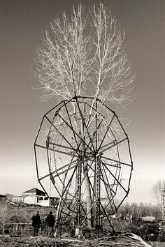 Chippewa Lake Park Ferris wheel has been there long enough for a tree to grow up through it.