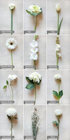 White Flowers Wedding Flower Guide Fl Bouquets Dresses March