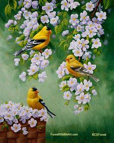 ..птички