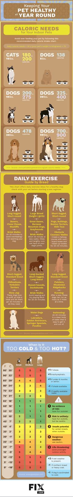 Check out this infographic on How to Keep Your Pet Healthy All Year Round
