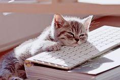 Can I go back to sleep now? (17 photos) - so-sleepy-1