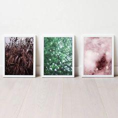 Photo Set Set of 3 Prints Nature Photography Abstract