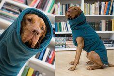 Dog Winter coat for all breeds - WiCoat - custom made soft warm double fleece winter coat (40.00 EUR) by KIWIDOGS