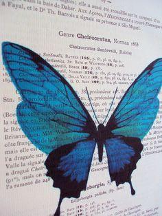 watercolor butterfly $15