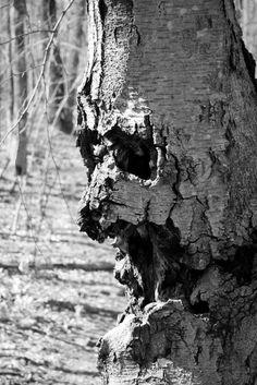 Scary Tree Face lucyguiliano.com