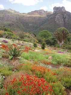Jardín Botánico Nacional Kirstenbosch en Ciudad del Cabo, Sudáfrica (por pia ).
