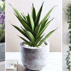 Potted in a stylish and smooth concrete pot, our impressive Aloe Vera looks so realistic you'll find it hard to believe it's not. Each tabletop pot is filled with a faux Aloe plant and scattered pebbles, adding a a fresh botanical feel to your home all ye Smooth Concrete, Concrete Pots, Concrete Furniture, Bathroom Furniture, Bathroom Interior, Modern Furniture, Cactus Plante, Pot Plante, Planting Succulents