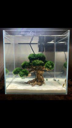 Aquascape tree with loss balls