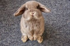 I want a bunny SO badly. Is it bad I hope my someday-kids want one so I have an excuse?