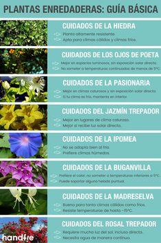70 Ideas De Huerto Y Jardín Huerto Huerto Jardin Sistema De Riego Por Goteo
