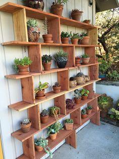 My husbands wonderful succulent shelf is part of Garden shelves - Plant Shelves Outdoor, Garden Shelves, Outdoor Plants, Outdoor Gardens, Outdoor Plant Stands, Indoor Gardening, Gardening Tips, Balcony Plants, House Plants Decor